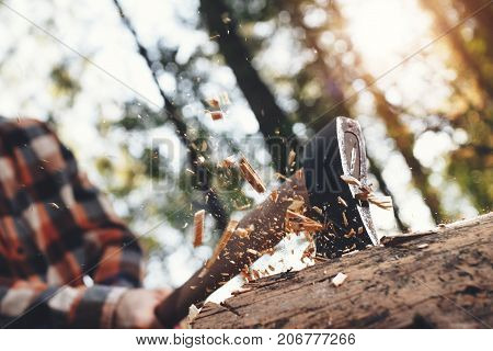 Strong Woodcutter Cuts Tree In Forest, Wood Chips Fly Apart. Blurred Background
