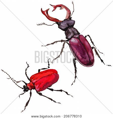 Exotic beetle wild insect in a watercolor style isolated. Full name of the insect: stag-beetle. Aquarelle wild insect for background, texture, wrapper pattern or tattoo.