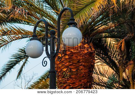 Streetlight on the background of palm closeup