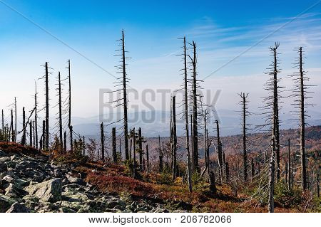 Lusen mountain Bayerischer wald nationalpark. Dried trees on the top of the mountain. View of the valley in the national Bayerischer Wald Nationalpark. Mountain Lusen in the bavarian forest Germany