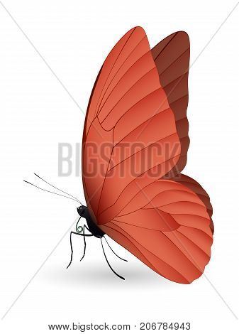 Beautiful butterfly isolated on a white background. Appias nero butterfly. 3D illustration