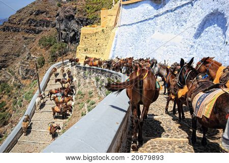 donkeys from Santorini Greece on the way to the old port of Fira
