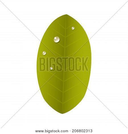 Tropical leaves summer green exotic jungle palm leaf nature plant botanical hawaii flora vector illustration. Tropic branch botany monsterafoliage.