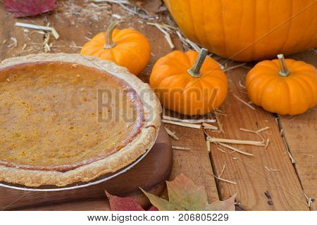 Whole pumpkin pie with small pumpkins on a wooden surface
