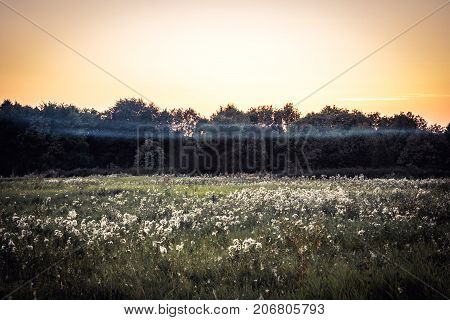 Rustic countryside landscape during sunrise at summer meadow with flowers and dramatic moody sky with clouds in vintage style