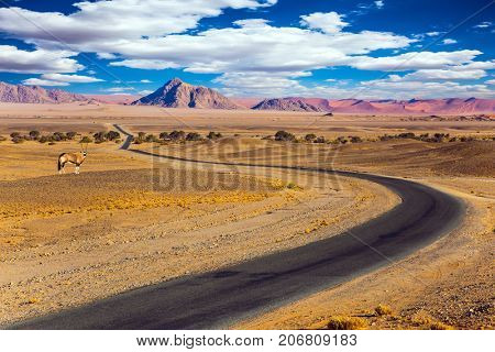 Antelope Oryx in Africa. The highway passes through the world's oldest Namib desert. The concept of exotic car tourism