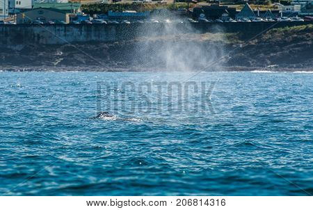 Blow Hole Of Gray Whale In Depoe Bay
