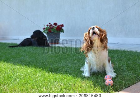 Lovely Dog On A Lawn