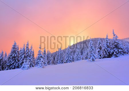 Beautiful pink sunset shine enlightens the picturesque landscapes with fair trees covered with snow and high mountains.
