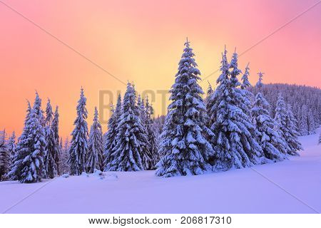Sunrise enlightens sky mountain and trees standing in snowdrifts covered by frozen snow with yellow shine. Winter landscape for leaflets.