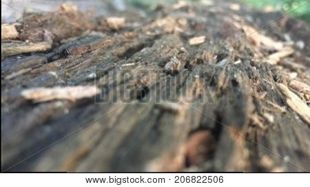 a old rotting log with little wood chips on the top