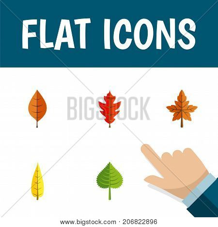 Flat Icon Maple Set Of Hickory, Frond, Foliage And Other Vector Objects