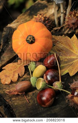 Autumn still life in a fall forest: mushrooms chestnuts pumpkins and leaves