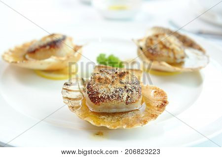 close up of grill scallop on white plate