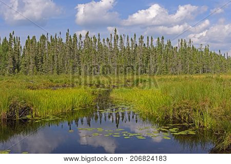 Canoe Path Through the Wetlands on Cross Bay Lake in the Boundary Waters Canoe Area in Minnesota