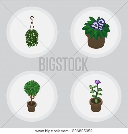Isometric Flower Set Of Flower, Blossom, Flowerpot And Other Vector Objects