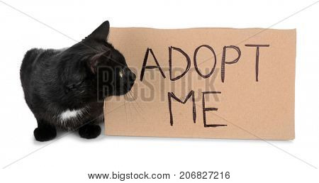Black cat and carton with text ADOPT ME on white background
