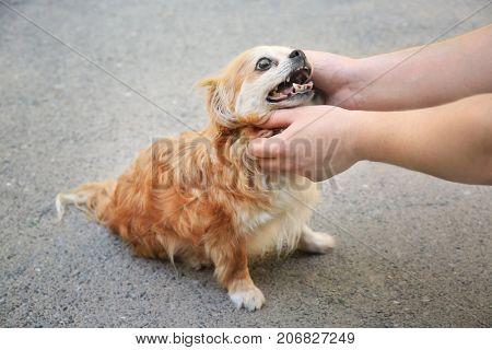 Man stroking homeless dog, outdoors. Adoption concept