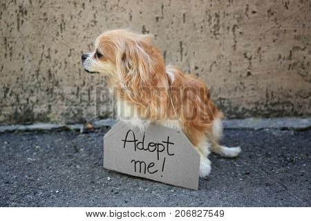Homeless dog and carton with text ADOPT ME, outdoors