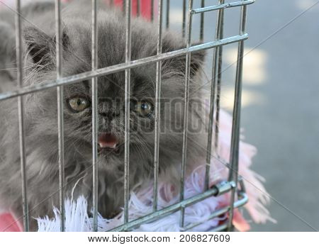 Fluffy cat in cage. Adoption concept