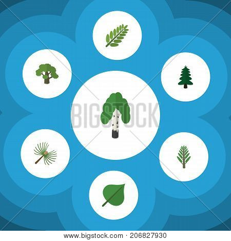 Flat Icon Ecology Set Of Hickory, Tree, Rosemary And Other Vector Objects