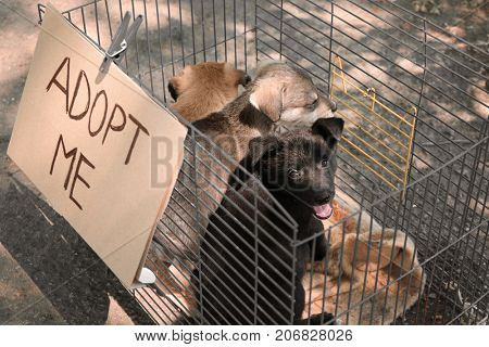 Cute homeless puppies in cage and carton with text ADOPT ME, outdoors