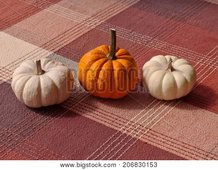 A plaid cloth under three lined up small pumpkins, an orange one with two white ones