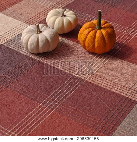 Three small pumpkins, two white and an orange one on a plaid cloth