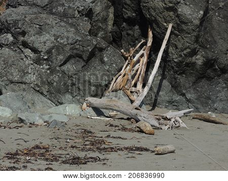 Driftwood Fort Oregon Coast Beach near Florence