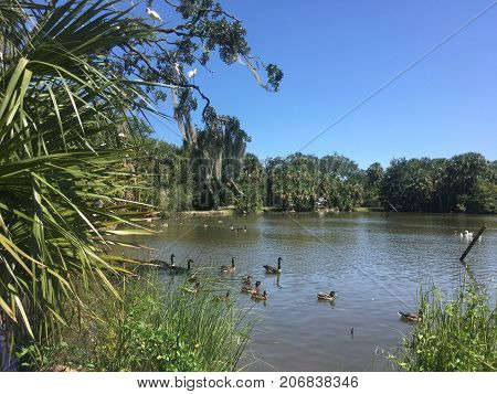 Birds Migrating To Pond In Louisiana Park