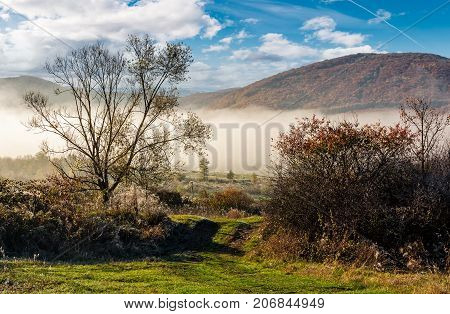 Countryside On Foggy Morning