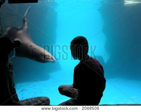 Child And Sea Lion Meet