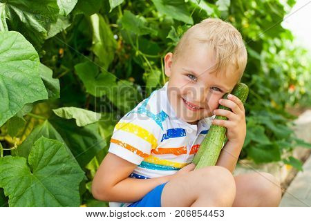 A Cheerful, Suntanned Blond Boy Gathers Green Cucumbers In A Greenhouse.