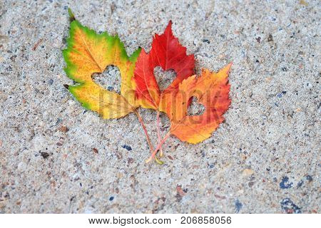 Colorful Autumn leaves with a heart shape cut out of the center