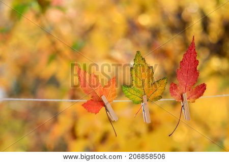 Colorful autumn leaves hanging on a clothesline by a clothespin