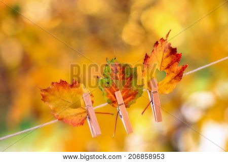 Colorful autumn leaves with a heart shape cut out of the center hanging on a clothesline by a clothespin