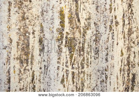 Lichen-covered Old Wavy Slate Background Close-up