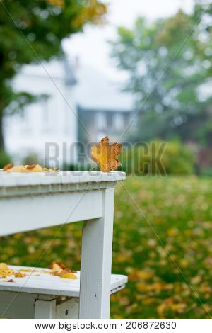 Maple Leaf On White Table At Countryside