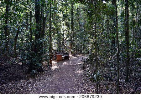 Park Benche In Australian Rain Forest