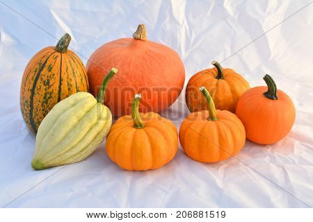 Group of autumn pumpkins and squashes on white background