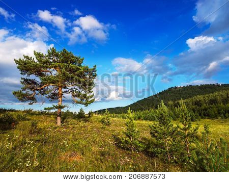 A large branchy tree in a beautiful natural place. Summer sunny day.