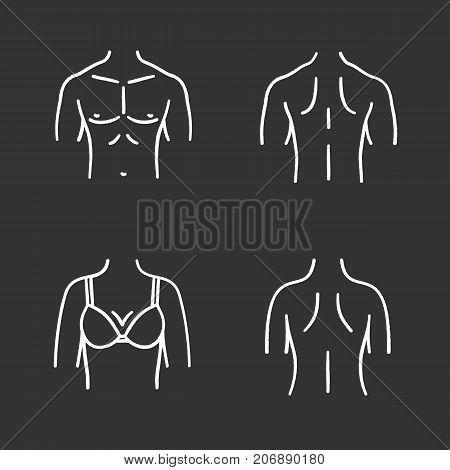 Body parts chalk icons set. Male and female backs, muscular torso, woman's breast. Isolated vector chalkboard illustrations