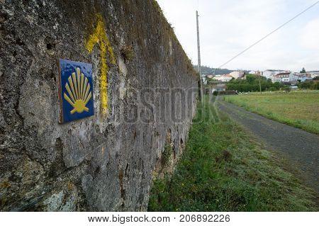 Yellow Shell In Spain On Mojon In Spain