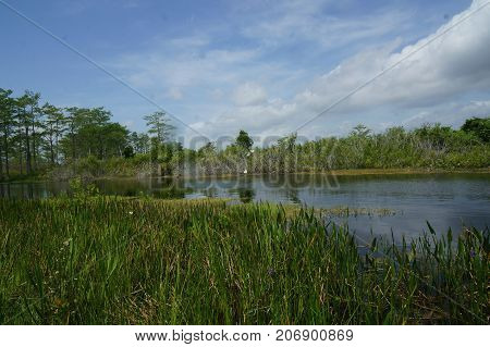 summer day in the Florida Everglades marsh