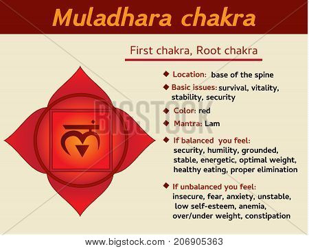 Muladhara chakra infographic. First root chakra symbol description and features. Information for learning kundalini yoga