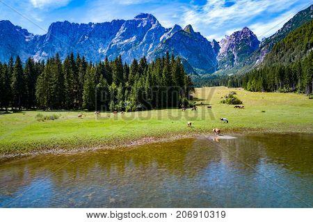 Horses graze on green field. Lake Lago di Fusine Superiore Italy Alps.