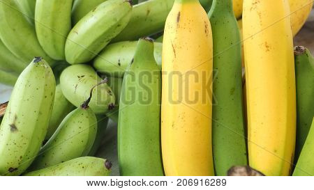Background Cavendish and Pisang Awak banana has copy space at left.