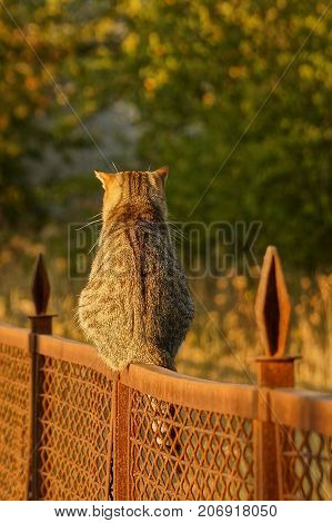 Gray cat sitting on an iron fence on the street