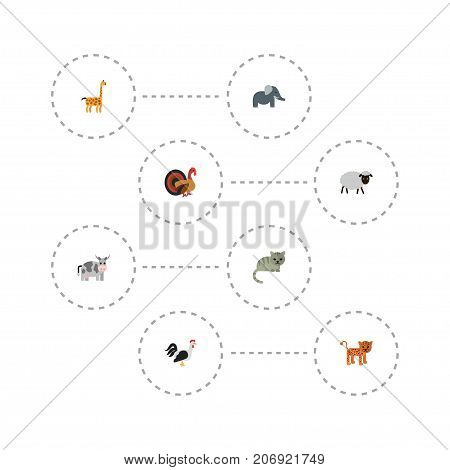 Flat Icons Camelopard, Kine, Kitty And Other Vector Elements