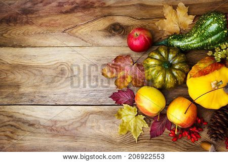 Thanksgiving Background With Green And Yellow Squash, Copy Space